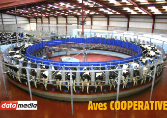 Aves COOPERATIVE